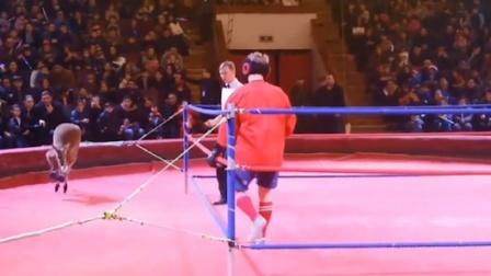 最滑稽的拳击比赛,简直无法想象!