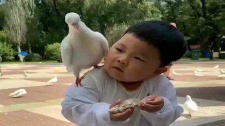 带儿子去广场喂鸽子,不料一只鸽子飞到他肩上