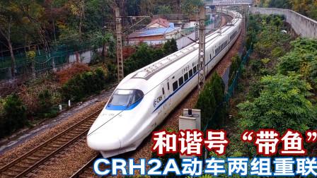 """飞驰的和谐号""""带鱼"""",宜昌东至杭州D2191次动车接近终点"""