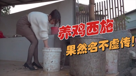 搞笑视频:兄弟你这女友哪找的!这就是所谓的养鸡西施吧?好漂亮