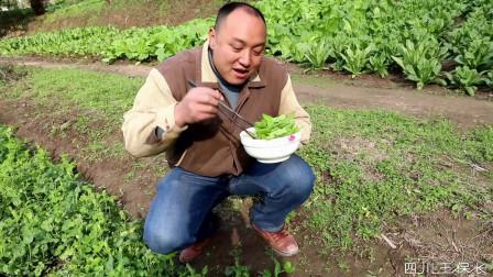 四川方言:老表偷摘邻居菜吃面,面条吃几口就吐了,爆笑!