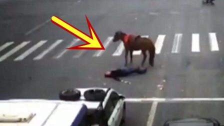 监控拍下作死画面,男子骑马闯红灯,当场被轿车撞飞!
