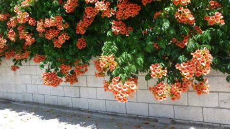 家里经常养的植物花,却能治风湿,就是孕妇看见要躲开!