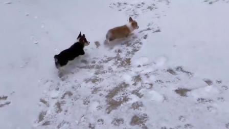 两只狗子第一次看到雪兴奋坏了