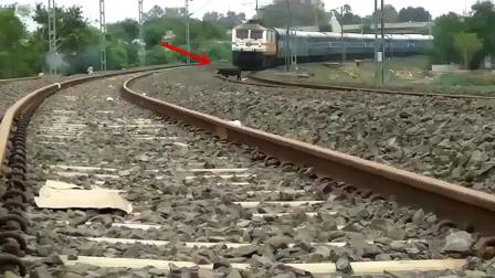野猪误闯火车铁轨,接下来意外瞬间发生!