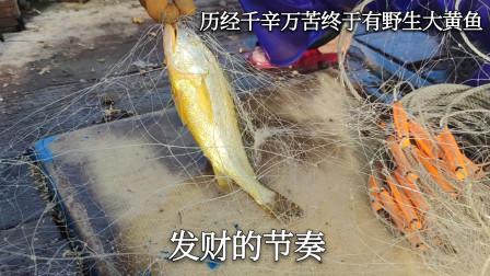 彪哥历经千辛万苦,终于捕到野生黄花鱼,这三条就能值近2000块钱
