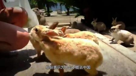 澳大利亚快愁哭了!你们就不能去中国吗?为何要来糟蹋我们