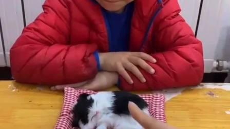 童年的记忆:宝贝能不能照顾好小猫咪吗