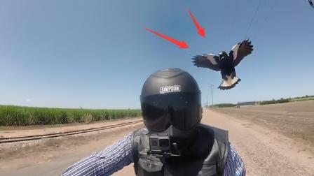 男子被乌鸦追杀3年!镜头拍下全过程