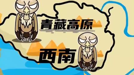益智每日搞笑:秃子难道都特别强吗?高山兀鹫