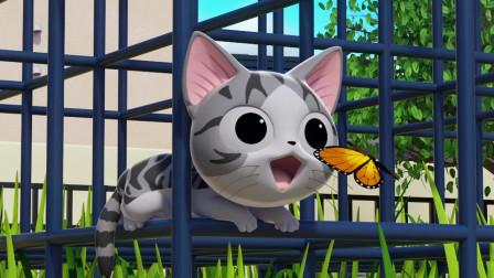 《甜甜私房猫》小蝴蝶,你喜欢小猫咪吗