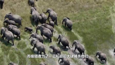 光天化日之下割断犀牛角,看着很残忍,真实目的是为了保护他们?