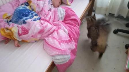 妈妈派猫去叫女儿起床,没想到小猫上床后的举动,直接把妈妈逗笑了