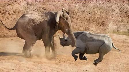 犀牛和大象两头壮汉相遇,会发生怎样的事情?