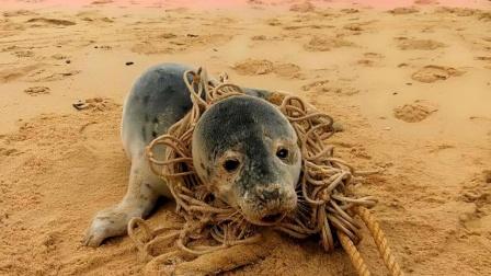 海豹被东西缠住脖子,工作人员取下绳子后泪目!