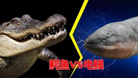 亚马逊河流王者:鳄鱼也会被瞬间秒杀
