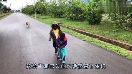 老外:带孩子们去农场,打草摘芒果偶遇非洲大蘑菇,开车撵不上驴!