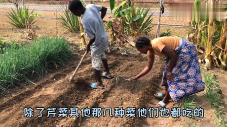 老外:非洲工人搬家后开朗许多,大家一起来种菜,路边买鱼一条3毛钱!