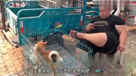 """农村狗市:犬舍倒闭大姐诉苦:再养""""裤衩子""""都赔光了,所有狗狗给钱就卖!"""