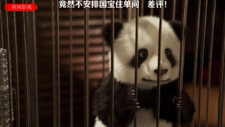 外国人喜欢熊猫,真是到了痴迷的状态!
