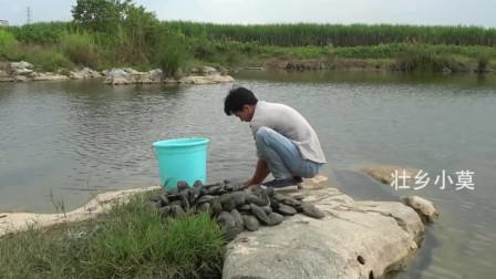 农村小莫:小莫搞野美食记,捞了两大桶河蚌煮了满满一个大铁锅,吃过瘾了