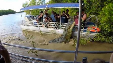 鳄鱼一跃而起靠近游客,你对危险不顾,危险也会随之而来!