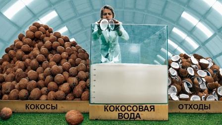 1000个椰子有多少椰子汁?新奇趣味实验!