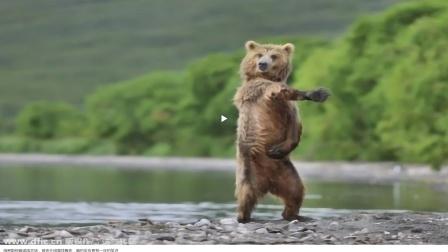 棕熊误闯俄罗斯农场,被雪球轰炸,棕熊反应承包一年笑点!