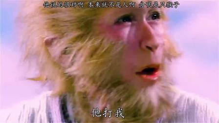 今天一只猴子和我说他是人,你看看像不像