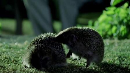 它号称世界上交配时间最长的动物,时长达21天!是我国特有物种
