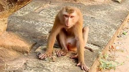 老鼠不幸被猴子抓住,下场比被猫抓住还惨,老鼠:你是在擀面皮吗