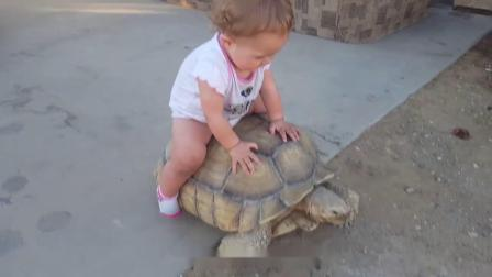 爸爸买回大乌龟,宝宝跟它混熟了之后,宝宝:快看我的新坐骑!