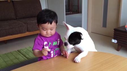 把最后一块饼干放在狗狗跟宝宝面前,宝宝的反应亮了,真是个吃货