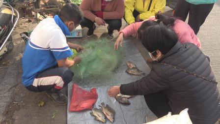 在荒废鱼塘放下两挂网,罗非鱼大爆网,当场拿去摆地摊赚100多