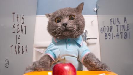 """猫咪不懂""""社交"""",到底会怎样?结局让人哭笑不得!"""