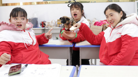 胖芸儿带小狗上学,为了让它吃饭方便,同学给小狗做狗盆