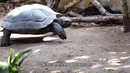 地球上最短命的动物,最多活一天,刚出生就为死亡做准备!