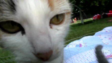 萌娃小可爱家里的小猫咪都长大了,小可爱:小猫咪你好,能陪我玩会吗