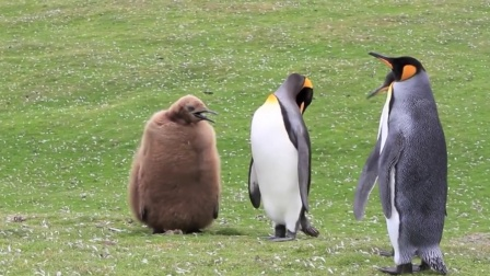 7只企鹅下楼,前6只就像刑满释放一样,最后一只样子竟像猕猴桃