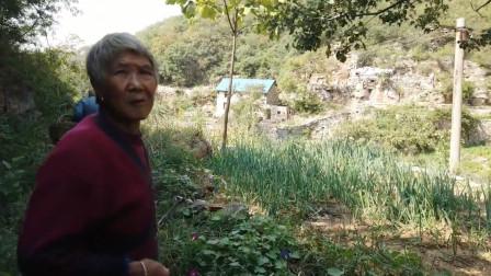 河南山区,秋收季节到了,老两口根本高兴不起来,看看什么原因