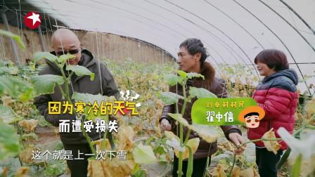 我们在行动:黄瓜大棚一大部分的小黄瓜都被冻坏了,网友:心疼!