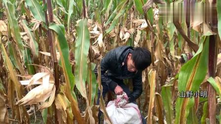 农村小明:小明正在干农活,小丫突然来电丈母娘要退货,买不起豪车尴尬了