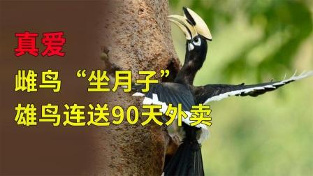 我国的爱情鸟,伴侣死了会绝食而亡