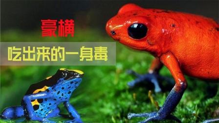 五彩斑斓的豪横箭毒蛙,一身毒都是吃出来的
