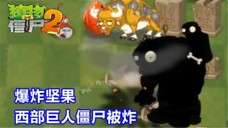 植物大战僵尸2:爆炸坚果高级任务3-4天,西部巨人僵尸被炸!