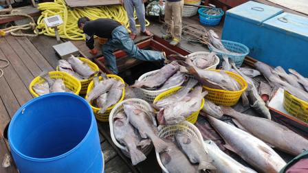 4个渔民出海钓鱼,4天时间钓一夹板鱼,能卖掉好几万块呢