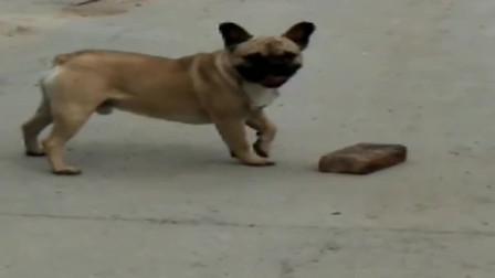 斗牛犬:看见没?这就叫搬起石头砸自己的脚!