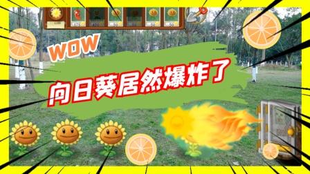 植物大战僵尸真人:当没与植物可用的时候向日葵居然爆炸了