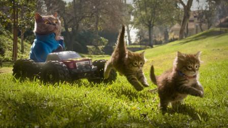 """家里有两只""""调皮猫"""",到底是个啥体验?全程闹心又疲倦!"""