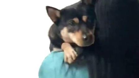 女朋友出差一个月,回来第一件事就是抱狗